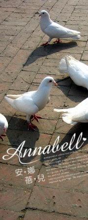 annabell_birds_2.jpg