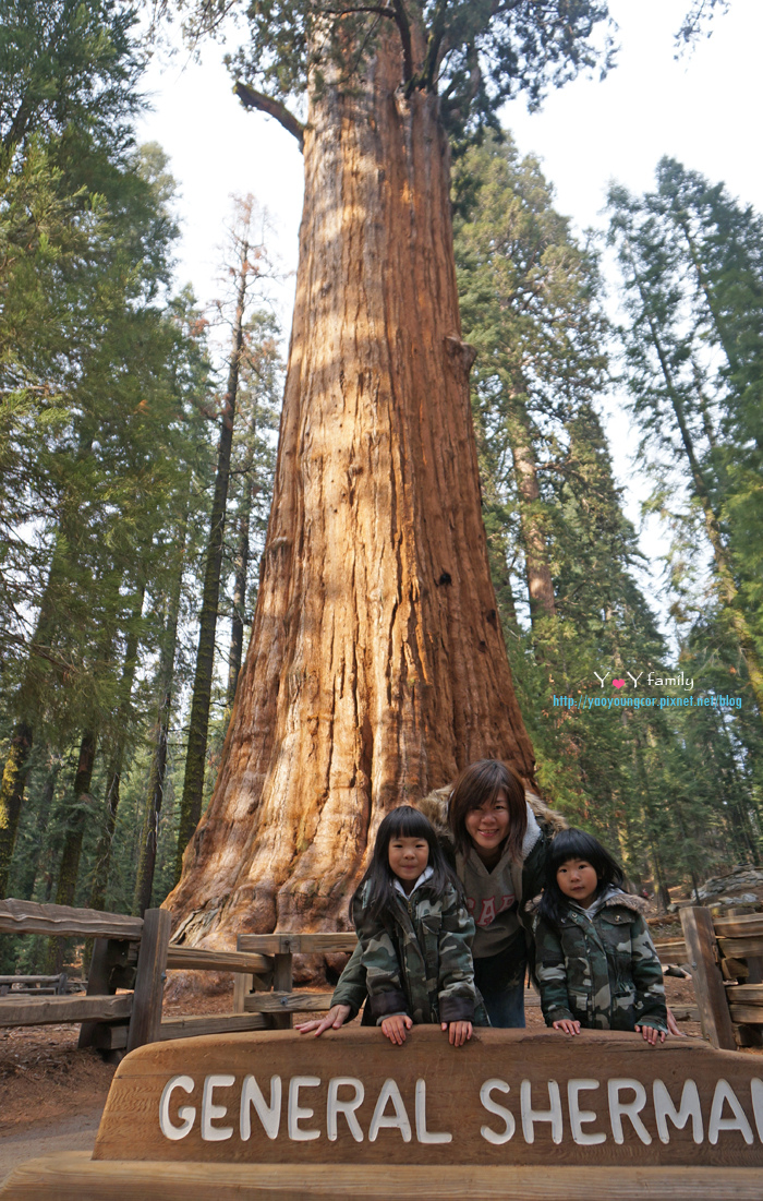 全世界最老的樹