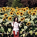 strasbourg:比人還高的向日葵
