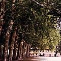 塞尚的故鄉 Aix