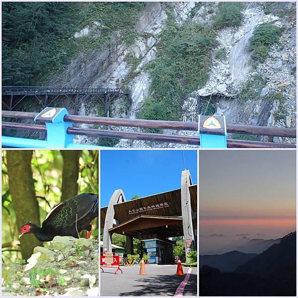 想到大雪山看台灣保育類動物嗎~新橋舊橋