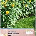 2012菊花展-18