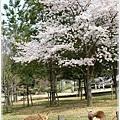 20130401_京阪神_1034