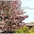 20130401_京阪神_1050