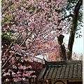 20130401_京阪神_1052