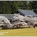 20130401_京阪神_1094