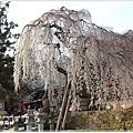 20130401_京阪神_1109