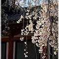 20130401_京阪神_1110