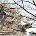 20130401_京阪神_1114