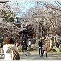 20130401_京阪神_1117