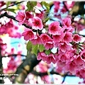 IMG_0126_1