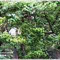 熊貓28.JPG
