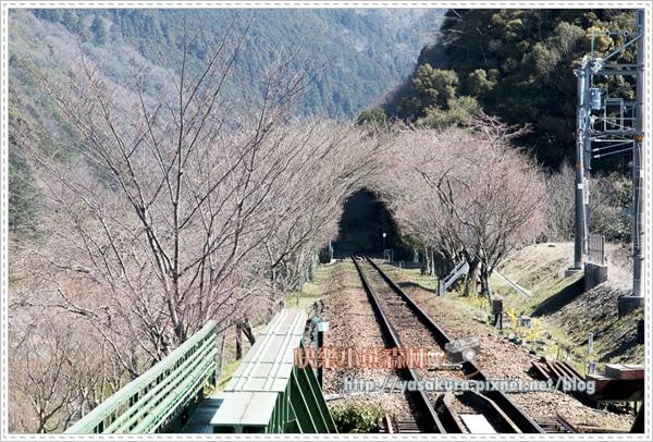 京都自由行073