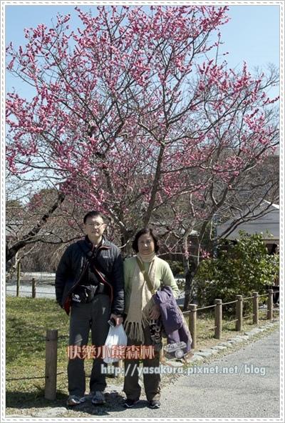 京都自由行229