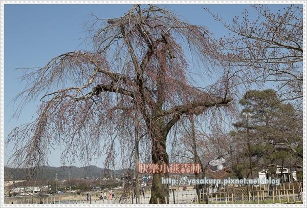 京都自由行230