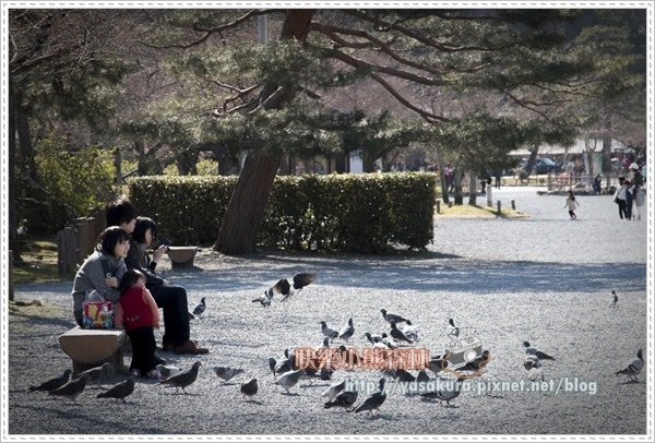 京都自由行240