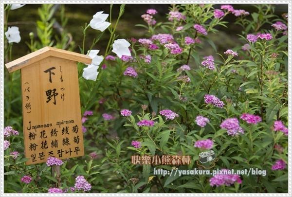 嵐山散119.jpg