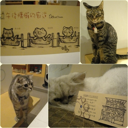 午後慵懶的廊道_店貓.jpg