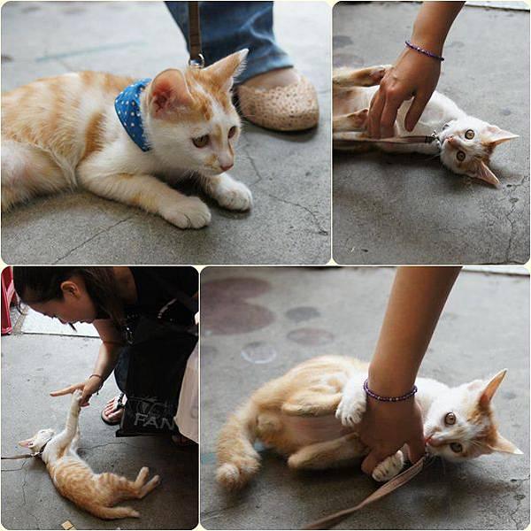 豐原遇到貓