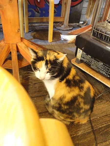 章魚燒攤前的店貓!!!