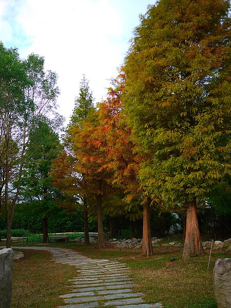 yard_tree.jpg