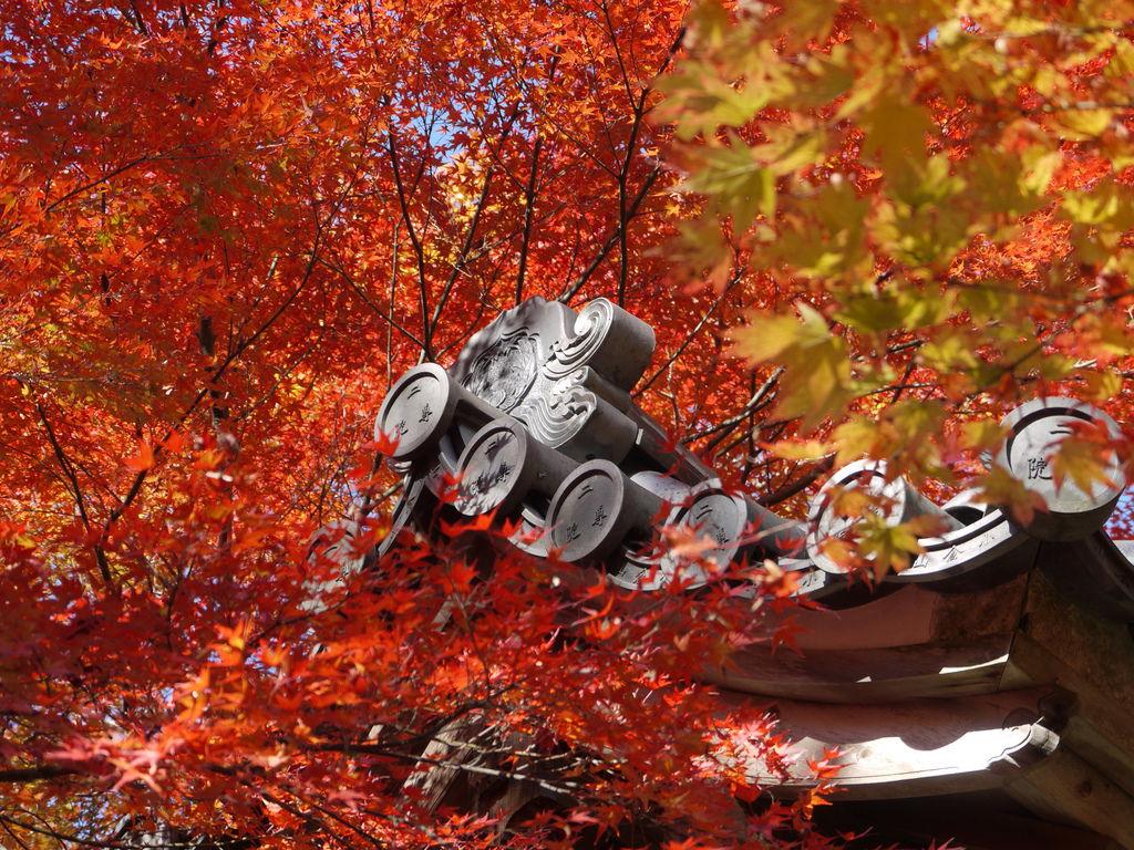 二尊院寺牆與楓紅1.JPG