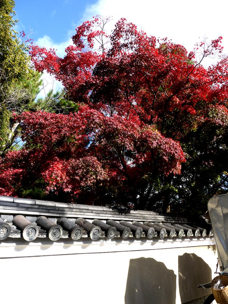 清涼院楓紅與白圍牆