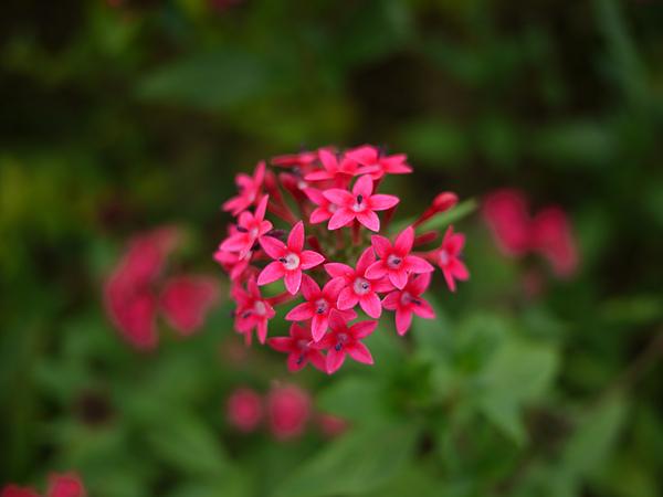 flower_hotPink.jpg