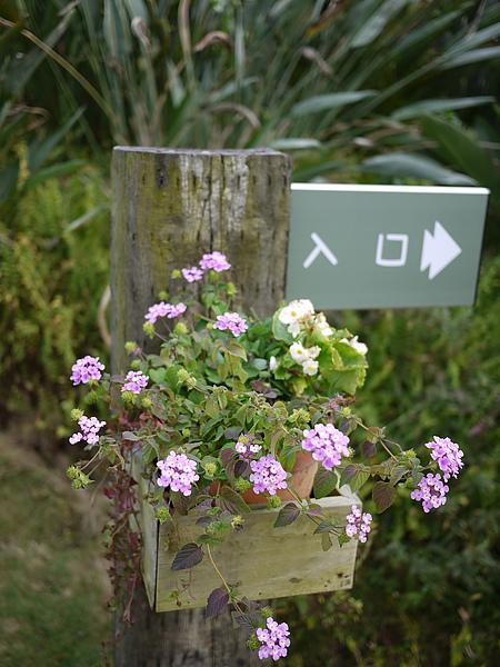entrance_flower.jpg