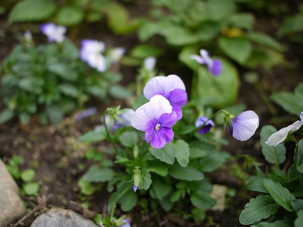 flower_purple.jpg