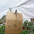 果園還賣草莓盆栽