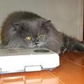 好煩唷!好好的貓生突然冒出一隻吵死貓的丁丁