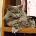 在衣櫥取暖是我女王的特權