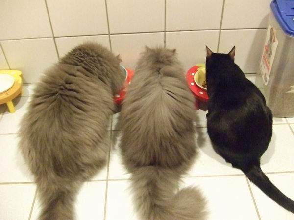 自己貓一起吃飯飯