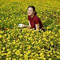 在大溪路邊看到的小黃花