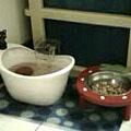 女王的飲水器和草莓貓碗