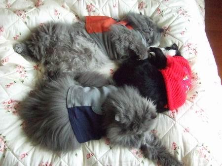 三貓一起睡