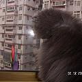 熊熊認真的看著他的小風車