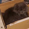 怎麼這麼愛躲盒子