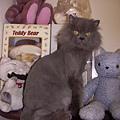 熊熊跟媽媽的貓娃娃