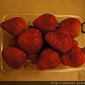 沒想到這是我們後來一週內吃到最好吃的草莓