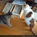 這2貓狹路相逢