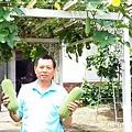 菜瓜棚下大豐收-雅唐
