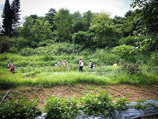 12-有機菜圃
