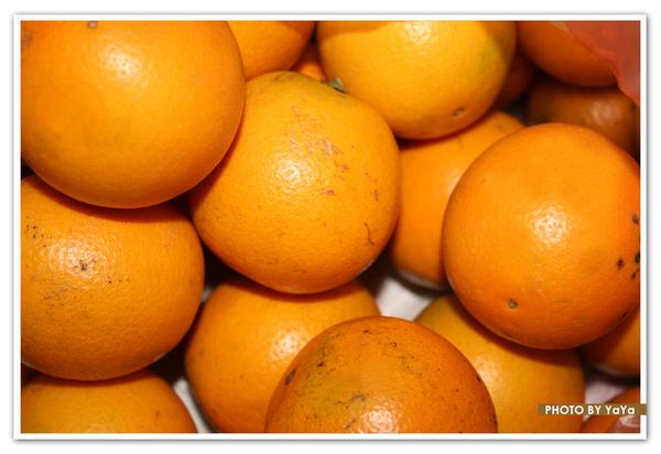 一堆柳丁.jpg