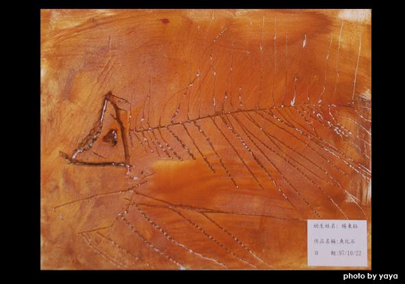 魚化石.jpg