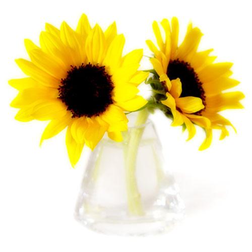 flower11_500.jpg