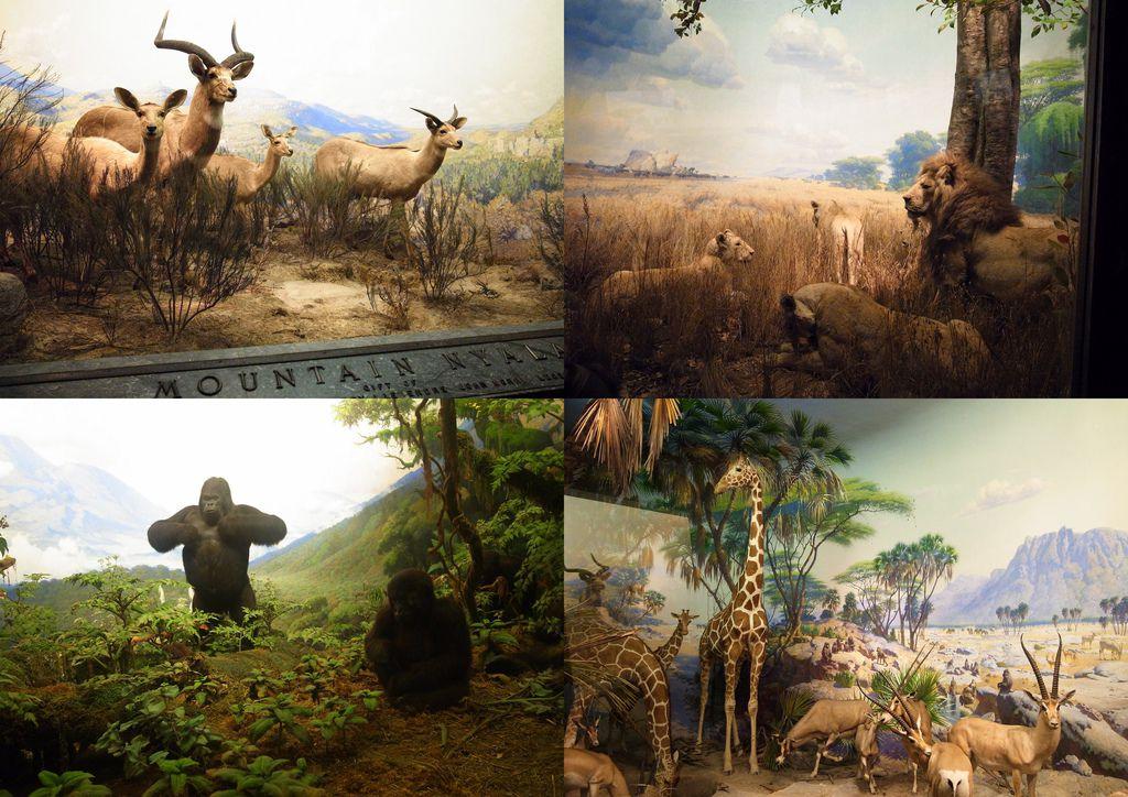 2010-07-29 自然歷史館8.jpg