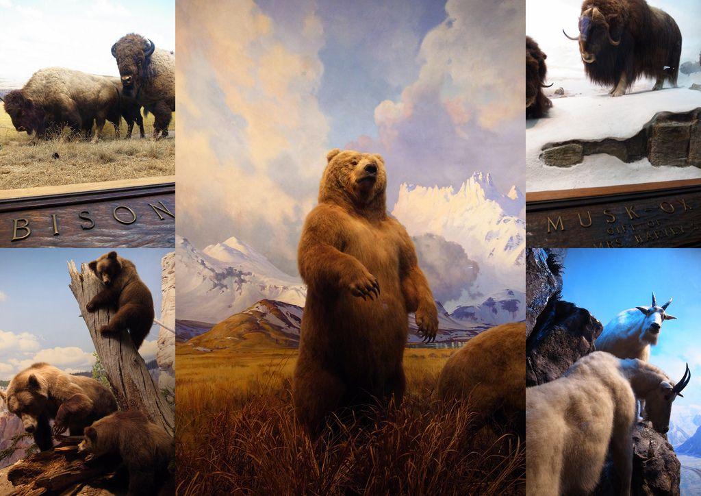 2010-07-29 自然歷史館24.jpg