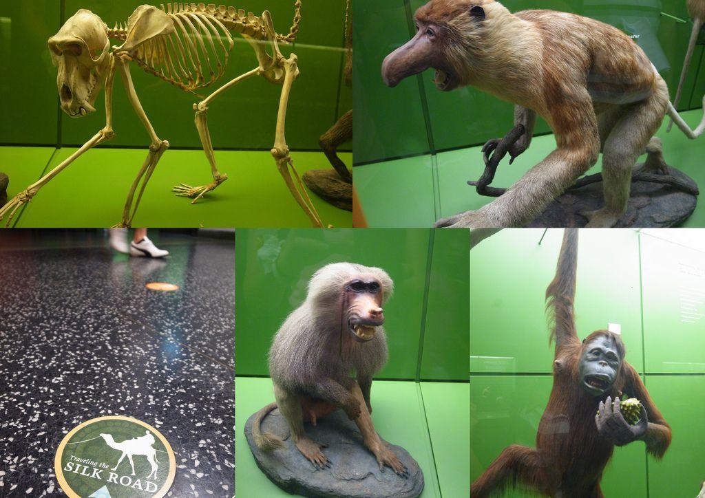 2010-07-29 自然歷史館37.jpg
